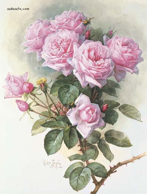 Paul de Longpré 鱼虫花的相册