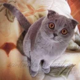 Stalingrad – Massengrab 家的大眼萌猫