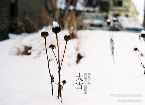 大雪——鴠鸟不鸣、虎始交、荔挺生