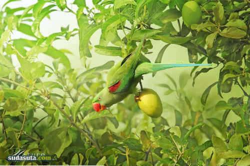 Sompob Sasismit 鸟类的畅想