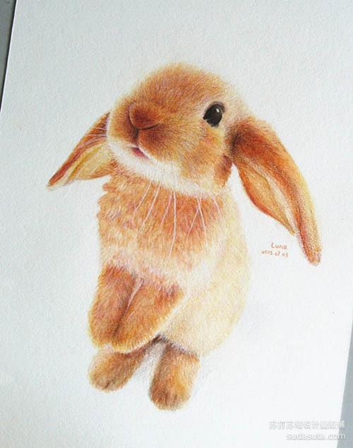 lunatree 兔子兔子和猫咪