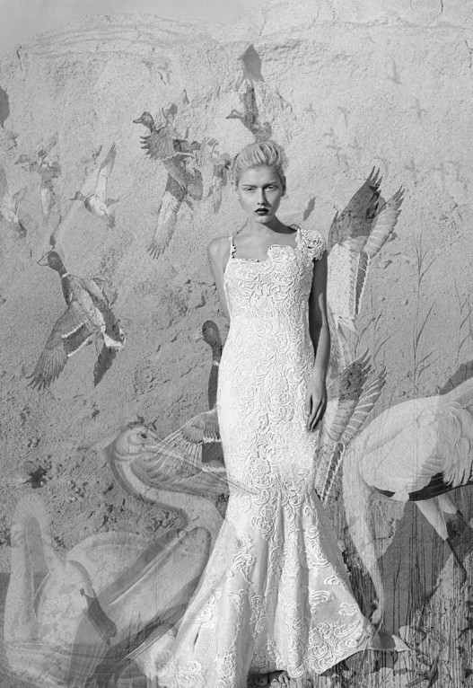 白鹭的优雅 时尚摄影欣赏
