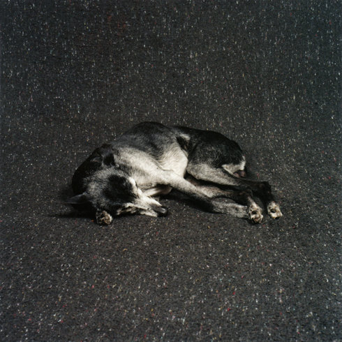 来自Maarten Wetsema的宠物狗摄影欣赏