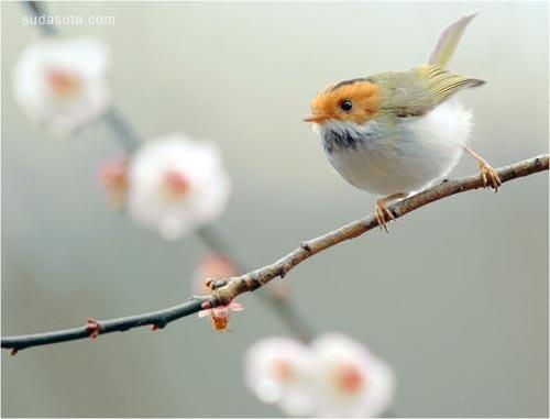 开着花 唱着歌