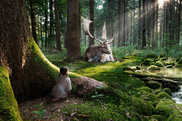 http://www.hdwallpapers.in/fairytale_forest-wallpapers.html