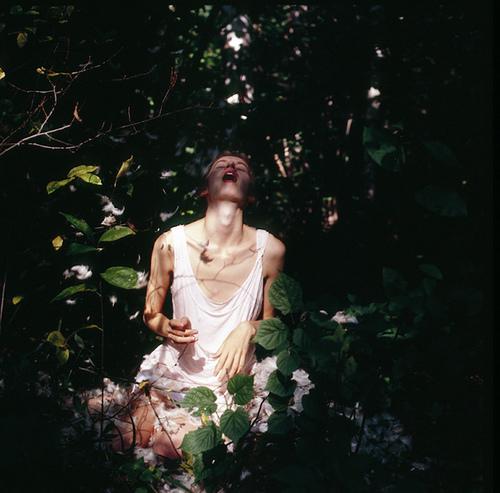 Natasha 树下的阴影