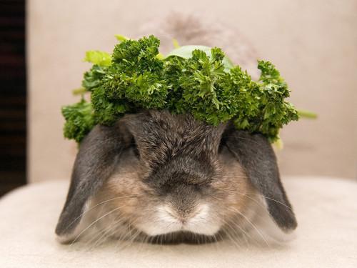 像兔子一樣活著。
