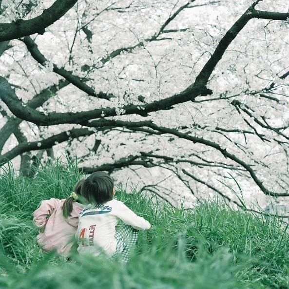 kero* 看,那一树的阳光。