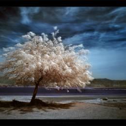 25张以树木为主题的自然摄影作品