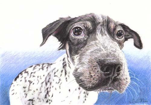 Ian Rees 手绘铅笔动物插画