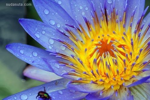 50张极其眩目的花朵照片