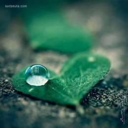 40张新鲜的水滴照片