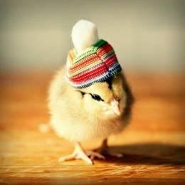 Julie Persons 小鸡也时尚