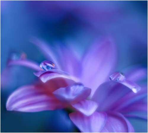 花开,花开花