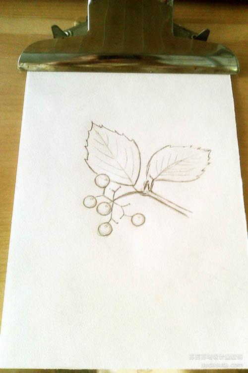 在速写纸上打草稿~注意小果果和树叶的比例~