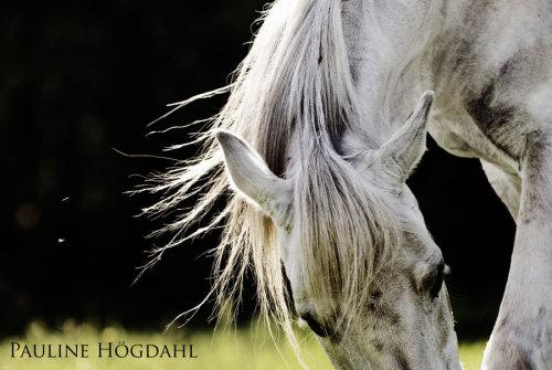 马的灵性 摄影作品欣赏