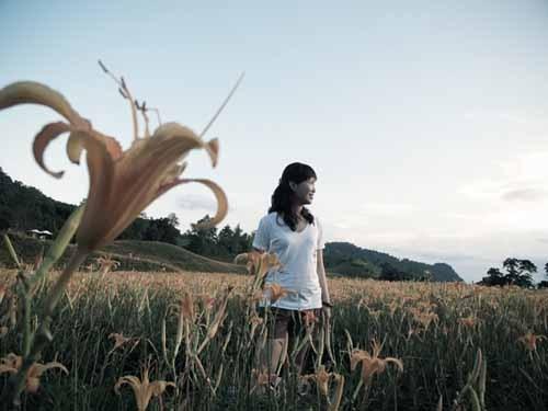 迪普西。Dipsy 花蓮-赤科山金針花海