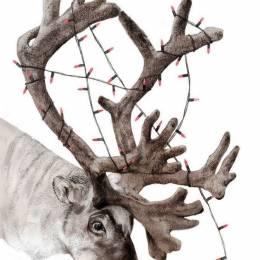 Jamie Mitchell 以动物环保为主题的插画作品欣赏