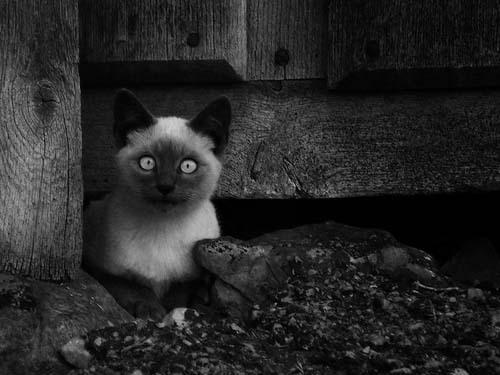Tiago Xavier 可爱的宠物摄影欣赏