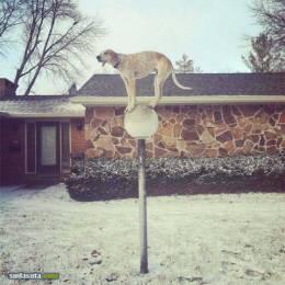 《Maddie The Coonhound》关于狗的故事