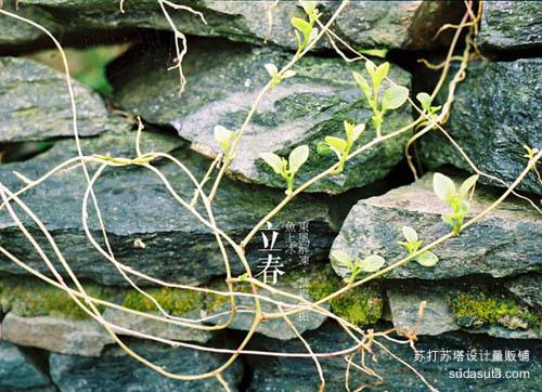 立春——东风解冻、蛰虫始振、鱼上冰