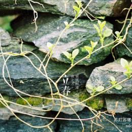 Lecia 植物版二十四节气