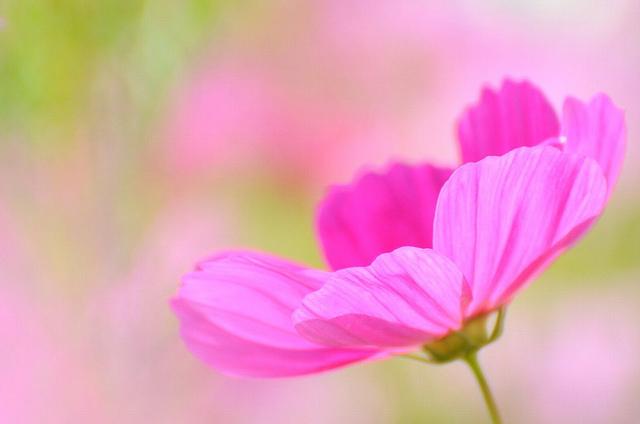 sonic oasis 花之写真