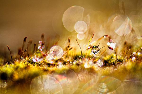 光线迷离 散景摄影欣赏