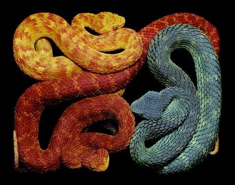 Guido Mocafico 蛇的印象