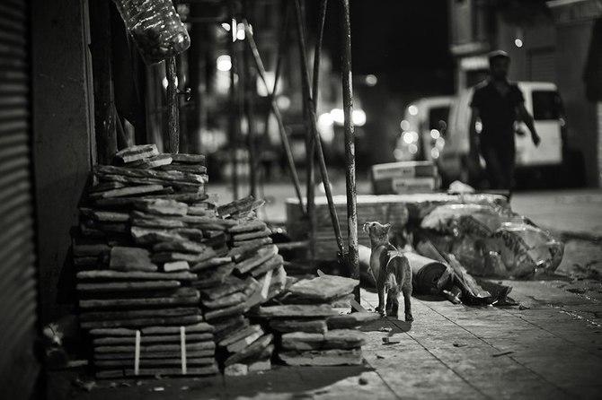 伊斯坦布尔的猫