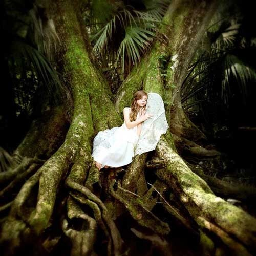 Terra Kate 梦幻的水下森林