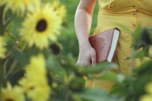 春日*黄色菊花*郊游