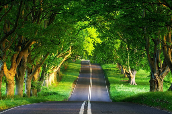 http://www.wallpaperfx.com/nature/scenary/green-road-wallpaper-3774.htm