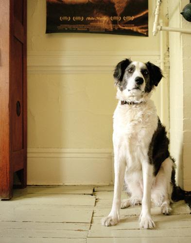 帅狗肖像照