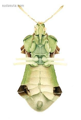Cornelia Hesse-Honegger 昆虫世界