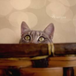 可爱猫咪 爱的诱惑