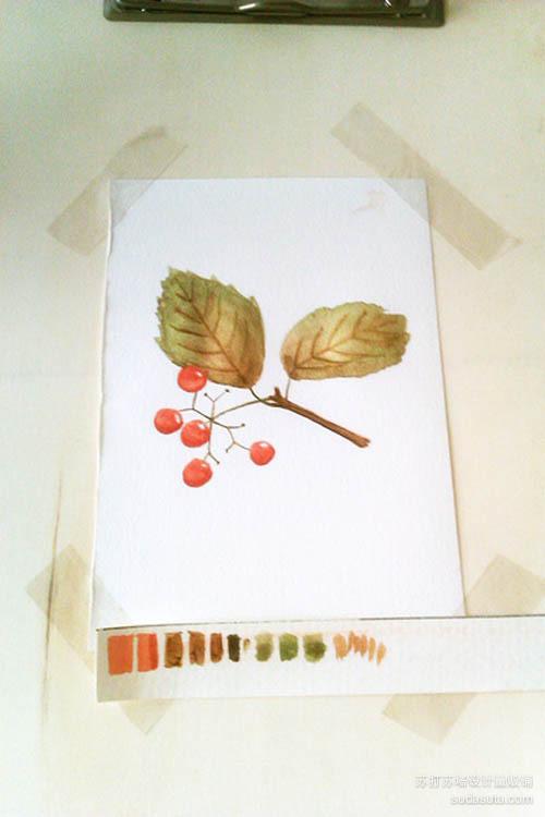 待画面干透了的时候,用熟褐色画叶脉~到这里这幅简易又小清新的水彩基本完成了~