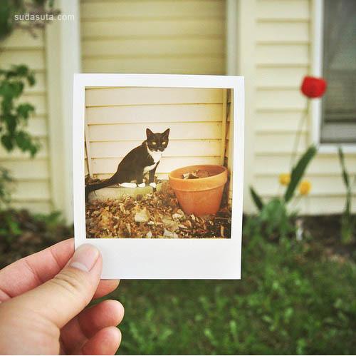 17张极富有创意的Polaroids照片