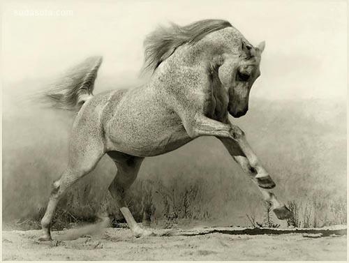 力量与速度 一组马的照片