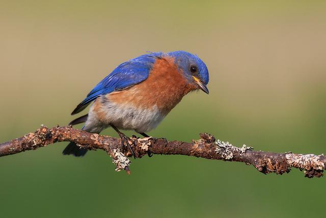 Philip Dunn 鸟类主题摄影欣赏