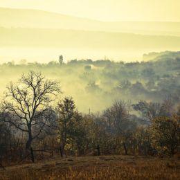 Elena Simona Craciun 自然摄影欣赏