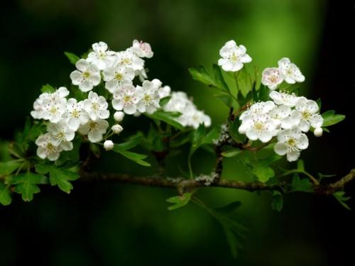 70张色彩丰富的春天照片