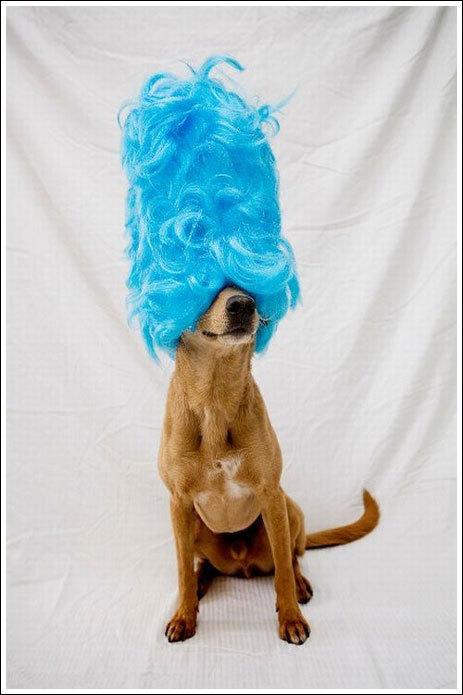 查克的狗!