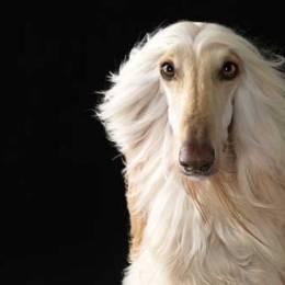 Lennette Newell 欢乐的狗狗