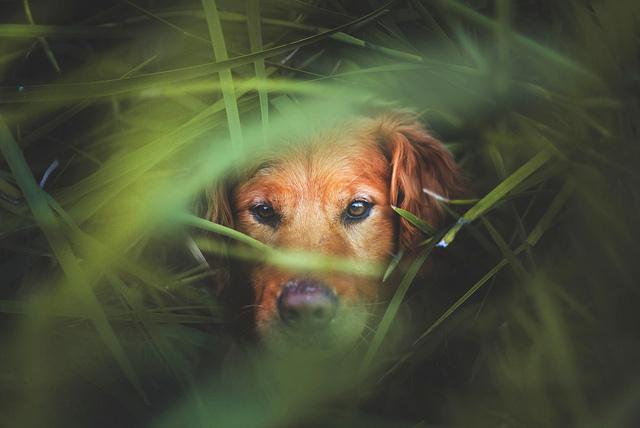 Jessica Trinh 幸福的狗狗