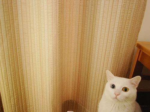 白吉的美瞳
