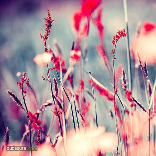 Iwona Drozda-Sibeijn 夏日的花