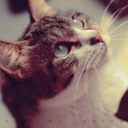 cclub99 猫咪与日光