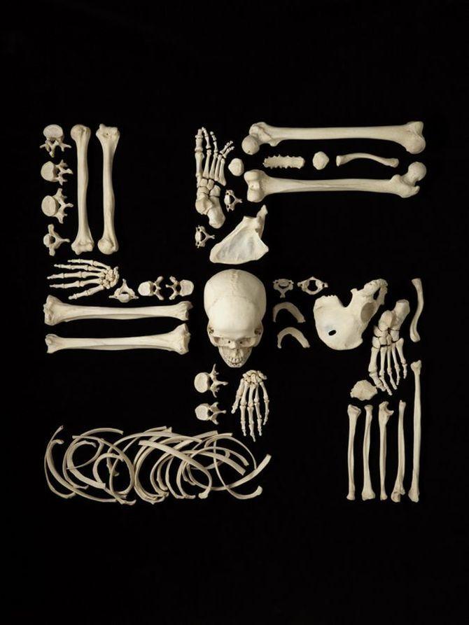 Francois Robert 骷髅的艺术