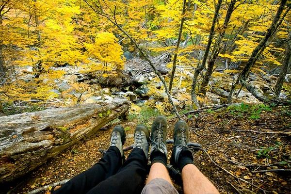秋天的落叶,纳韦尔瓦皮国家公园。阿根廷。